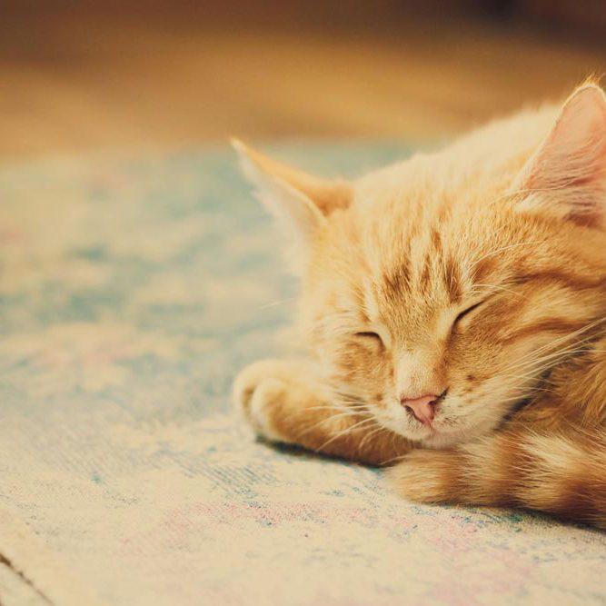 servicios-espera-gatos