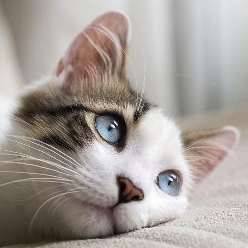 Gato insuficiencia renal