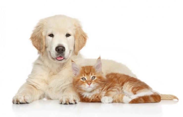 promocion antiparasitarios mascota