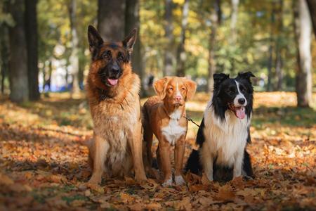 Vetland-concurso-canino