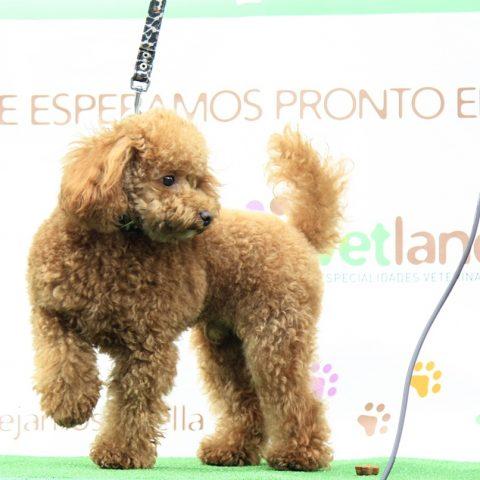 Primer Concurso Canino Vetland