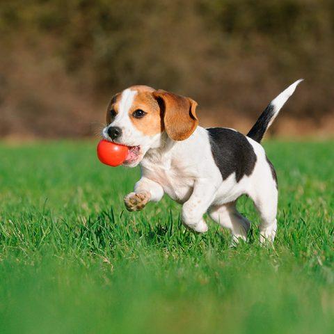 Etología de cachorros