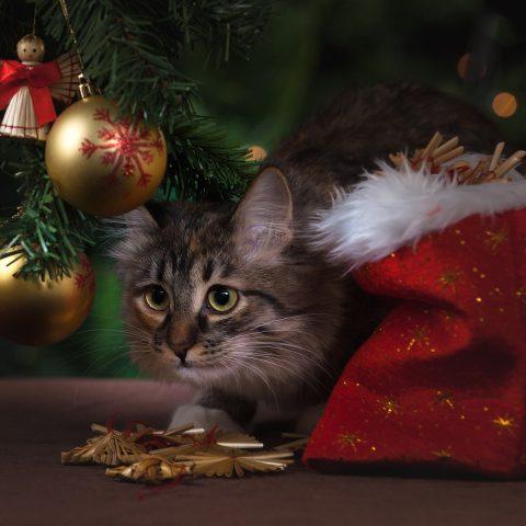 Peligros para nuestra mascota en Navidad