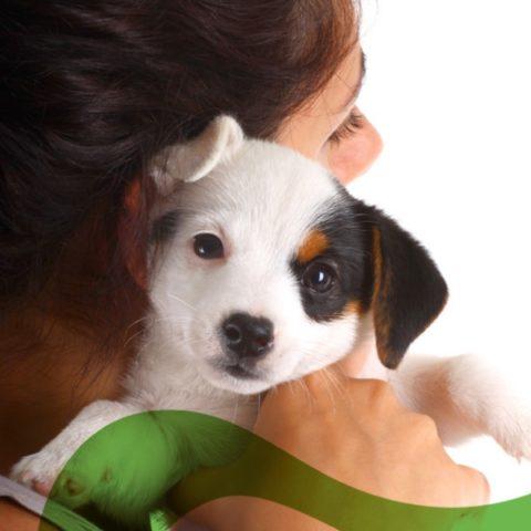 Blog-camapaña-cachorro