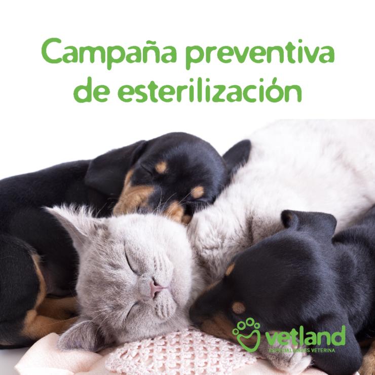 Campaña esterilización 2020
