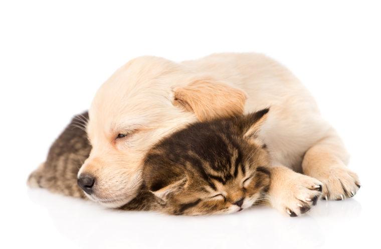cachorro de gato y perro durmiendo juntos